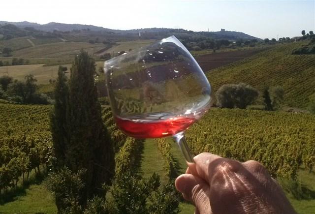 Wine trekking sulle colline di Moglio: la