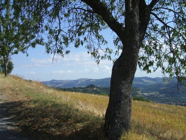Escursione - Il territorio e gli alberi monumentali