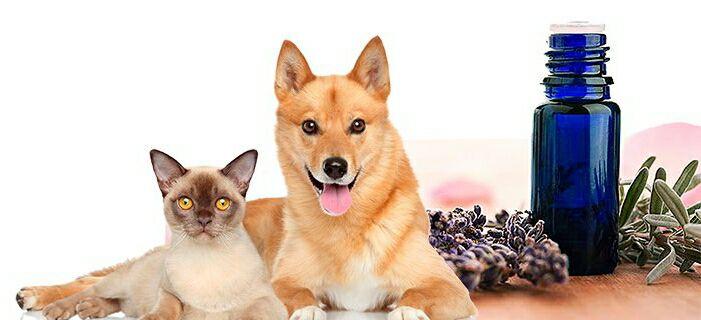 Seminario- Olii Essenziali per gli Animali
