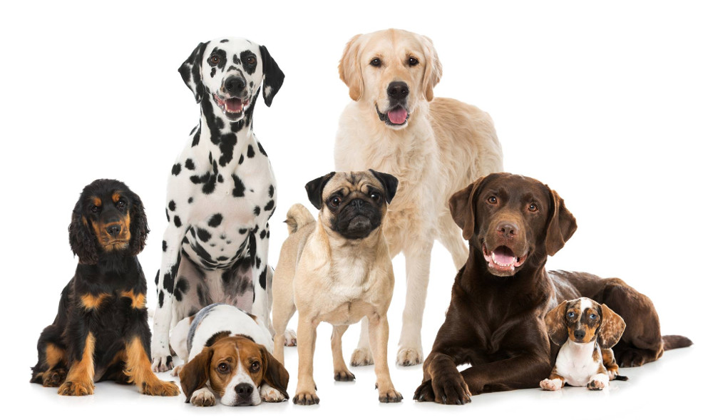 Canileducando - ciclo di serate per una società a prova di cane