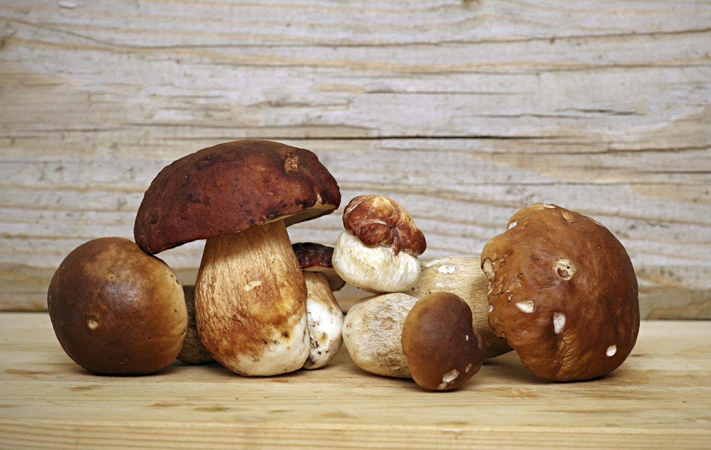 Serata tutto funghi con cena all'aperto